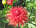 Garden Close Flower