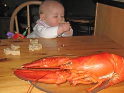 Lobster Baby 2