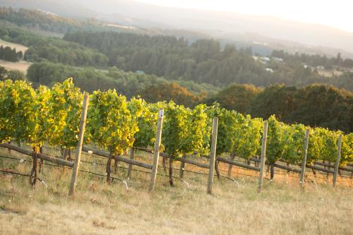 Covey Ridge Vineyard
